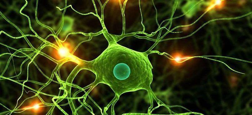 LifEscozul® - Resultados Cáncer Cerebral